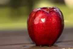 唯一的苹果 免版税图库摄影