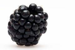 唯一的黑莓 库存图片