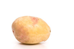 唯一的potatoe 库存照片