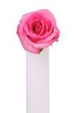 唯一粉红色的玫瑰 免版税库存照片