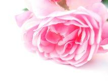 唯一粉红色的玫瑰 免版税库存图片