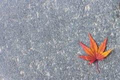 唯一红色秋天叶子 免版税库存图片