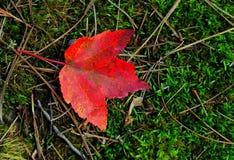 唯一红色秋天叶子 免版税库存照片