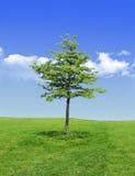 唯一结构树 免版税图库摄影