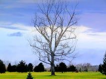 唯一结构树 免版税库存图片