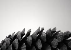 唯一背景锥体灰色查出的杉木的配置&# 免版税图库摄影