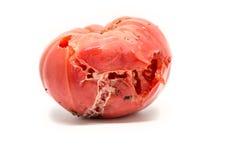 唯一腐烂的蕃茄 免版税库存图片