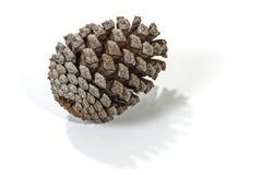 唯一自然棕色松树锥体样式和纹理 免版税库存图片