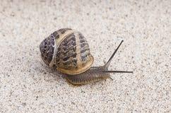 唯一蜗牛 库存图片