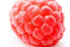 唯一鲜美莓宏观射击  免版税图库摄影