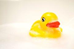 唯一鸭子 免版税图库摄影