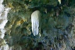 唯一,看钟乳石的水母 免版税库存照片