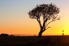 唯一结构树 图库摄影