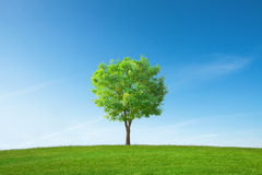唯一结构树 免版税库存照片