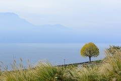 唯一Tree俯视的湖和山 免版税库存照片