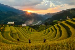 唱了Nhu马掌和H ` Mong种族人民的露台的米领域 免版税库存图片