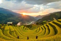 唱了Nhu马掌和H ` Mong种族人民的露台的米领域 免版税库存照片