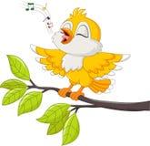 唱歌在白色背景的逗人喜爱的黄色鸟 免版税图库摄影