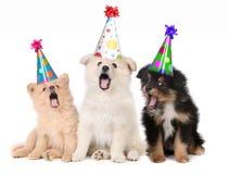 唱歌曲的生日愉快的小狗 免版税库存图片
