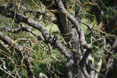 啄木鸟森林 免版税库存照片