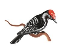 啄木鸟 库存例证