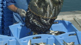 商业捕鱼业产业渔夫在小船的鱼捕获在渔靠码头 股票视频