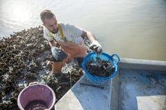 商业牡蛎渔夫 免版税库存照片