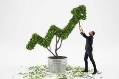 商人喜欢作为箭头被塑造的一棵大植物 免版税库存图片