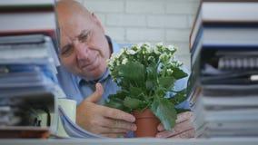 商人放松看对一朵花在办公室屋子里 库存照片