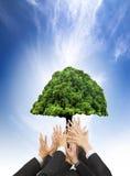 商人的手拿着绿色老树的 图库摄影
