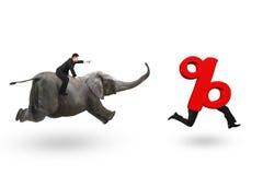 商人追捕百分率符号的骑马大象 免版税库存照片