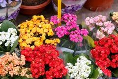 从商店的五颜六色的美丽的花 免版税图库摄影
