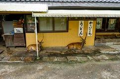 商店鹿infront在奈良日本 免版税图库摄影