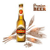 啤酒剪影概念 库存照片