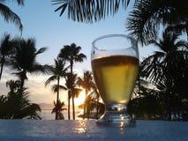 啤酒和棕榈树 图库摄影