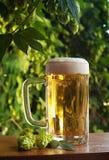 啤酒和蛇麻草 免版税库存图片