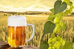 啤酒和蛇麻草 库存照片