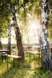 啤酒庭院在阳光下在树下 库存图片