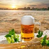 啤酒杯和蛇麻草 免版税库存照片