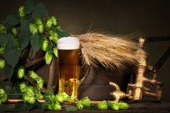 啤酒杯用大麦和啤酒花球果树 库存图片