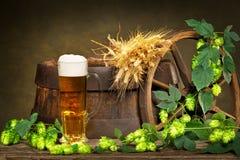 啤酒杯用大麦和啤酒花球果树 免版税库存图片