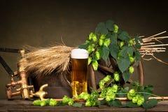 啤酒杯用大麦和啤酒花球果树 图库摄影