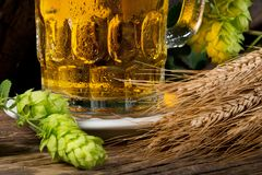 啤酒杯用蛇麻草和大麦 图库摄影