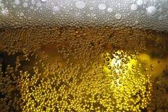 啤酒特写镜头在玻璃的 免版税库存照片