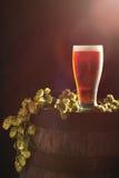 啤酒用蛇麻草 免版税库存图片