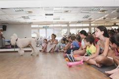 啤酒舍瓦、以色列、7月25日,孩子-观众和白色长卷毛狗, 2015年 免版税库存照片