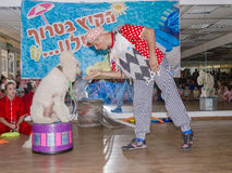 啤酒舍瓦、以色列白的长卷毛狗、小丑和一名妇女一件红色和服的在镜子的霍尔, 2015年7月25日执行 图库摄影
