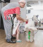 啤酒舍瓦,以色列-小丑使用与白色长卷毛狗箍, 2015年7月25日 库存照片