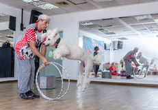 啤酒舍瓦,以色列-跳跃的小丑和白色长卷毛狗通过箍, 2015年7月25日 免版税图库摄影