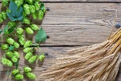 啤酒花球果树和大麦 免版税库存照片
